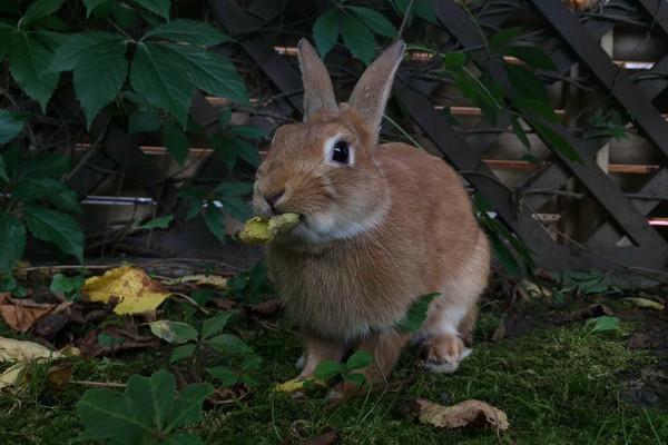 Čím krmit králíčka?