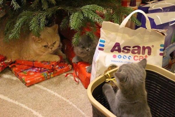 Jak se připravit na pořízení kočky?